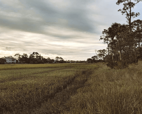 FISH ISLAND PRESERVE, GRASS AND TREES